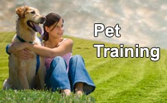 Smart Solutions for Pet Care